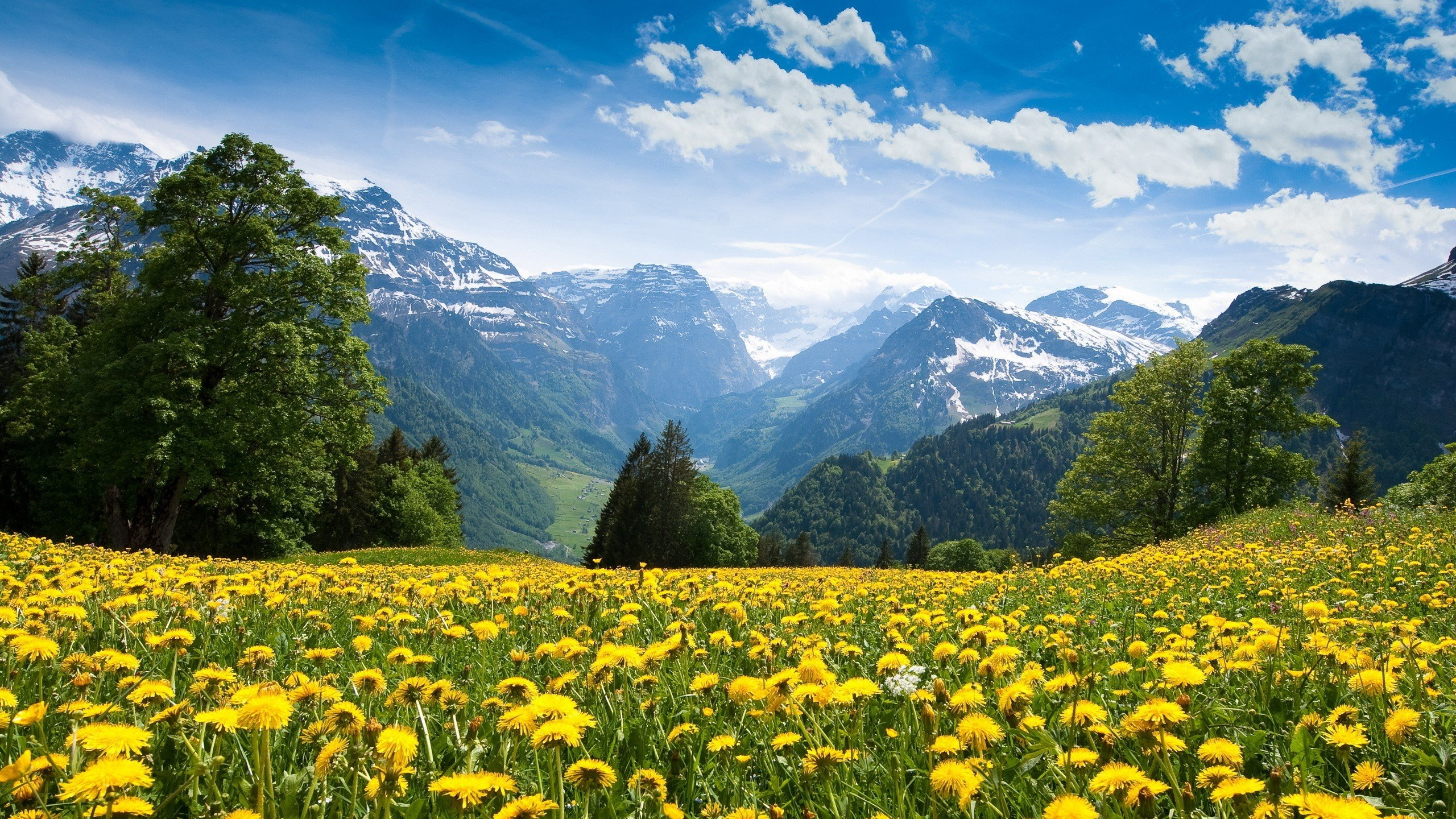 Beautiful-Spring-Landscape